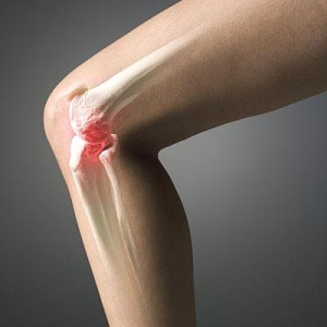 Костное соединение в колене человека