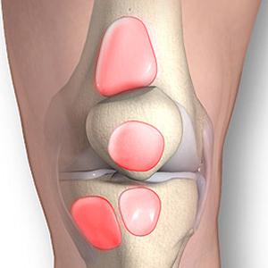 Расположение бурс коленного сустава
