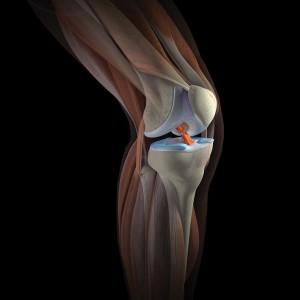 Схематичное изображение коленного сустава