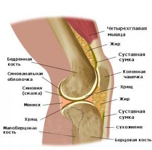 Схема коленного сустава и причина скрипа