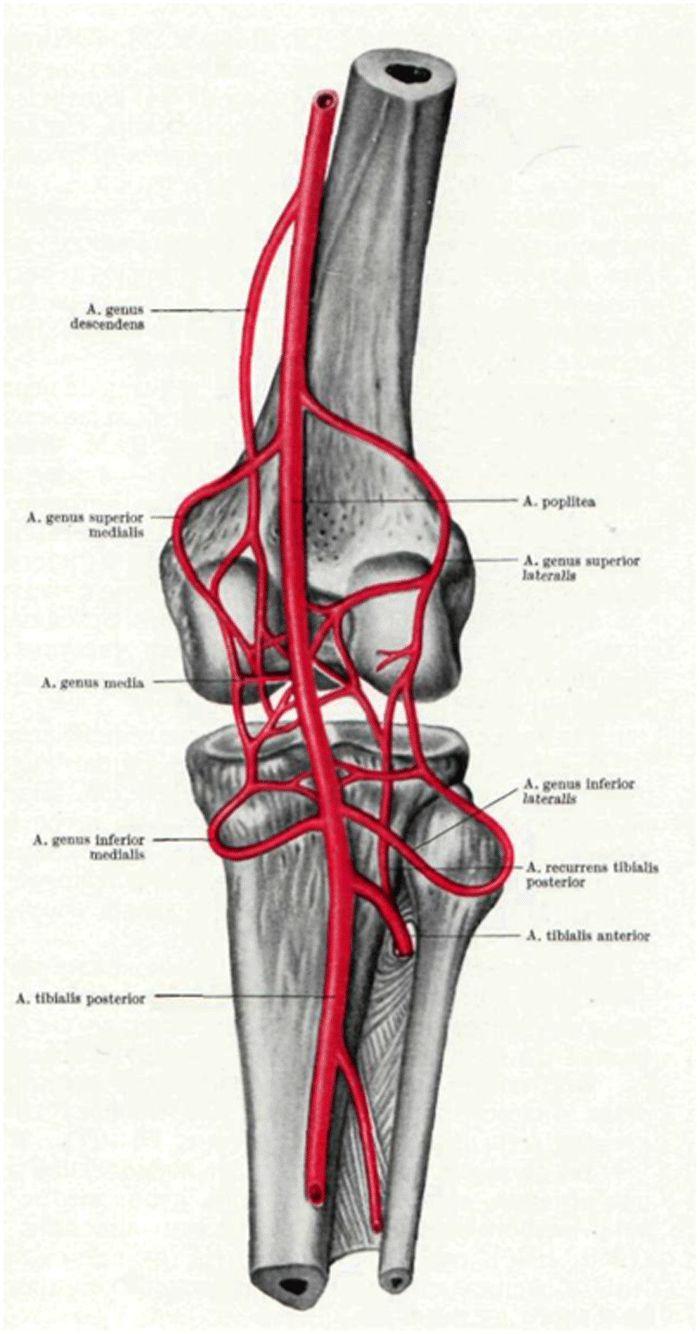 ложный сустав под коленом боли