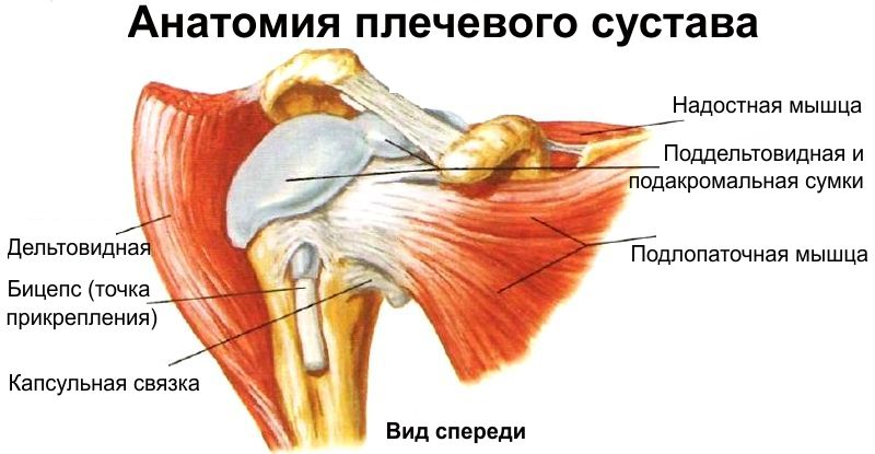 Анатомическая схема плечевого сустава