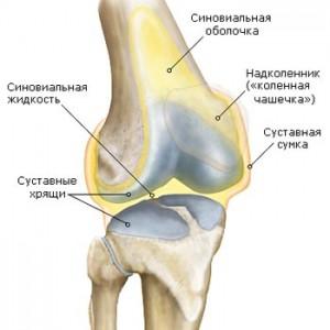 Схема возникновения синовита колена