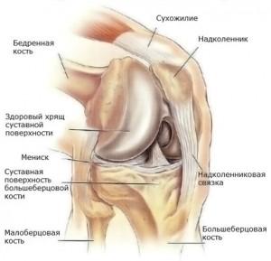 Изображение - Схема связок коленного сустава kolennyi-sustav-01-300x289