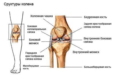 Боковая связка коленного сустава чем полезен арахис для суставов