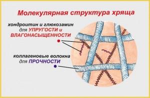 Структура хряща