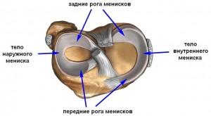 Схема менисков колена