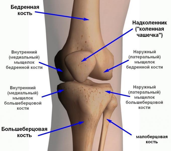 Что такое коленный сустав строение м.норбеков суставная йога 18 сидхов